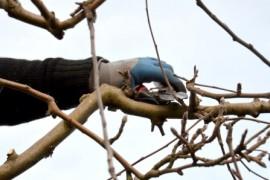 Linee guida Inail per il lavoro su alberi con funi