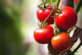 Prodotti da pomodoro, passate e derivati: obbligo di origine in etichetta