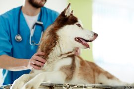 Legge europea 2017, ricetta elettronica veterinaria e anagrafe equidi