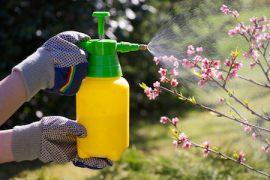 Linee guida per l'individuazione degli interferenti endocrini nei pesticidi e nei biocidi